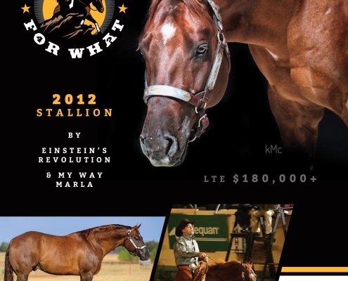 Turn Down for What Reining Horse Breeding Information